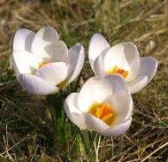 Więcej o: I dzień wiosny :)